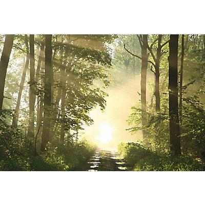 Wandbild Forest | Plexiglas | HxBxT 650 x 98 x 3 mm