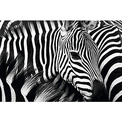 Wandbild Zebra | Plexiglas | HxBxT 650 x 98 x 3 mm