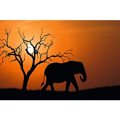 Wandbild Out of Africa | Plexiglas | HxBxT 650 x 98 x 3 mm